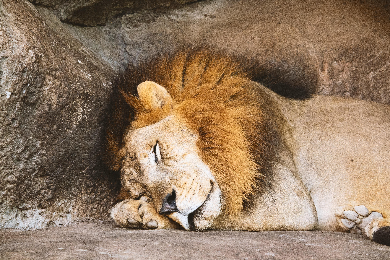 animal-animal-photography-big-1187987